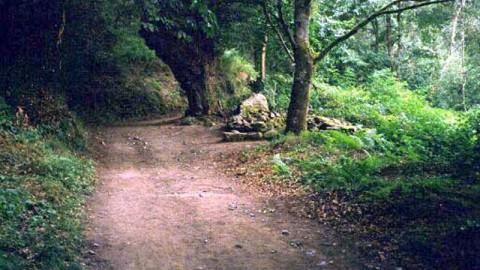 sarria-bosque0001-800