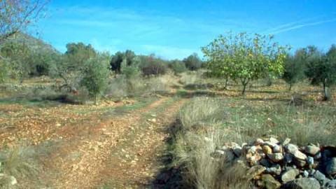 Camino Real de Valencia a Monzón entre olivos