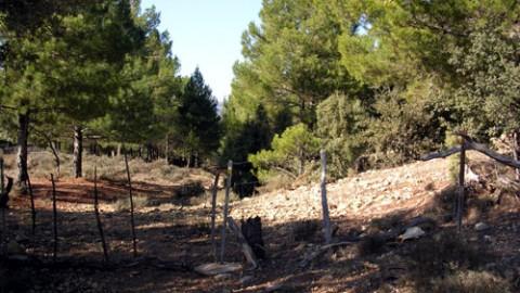 Portillo en la senda del pinar (Km 134,5)