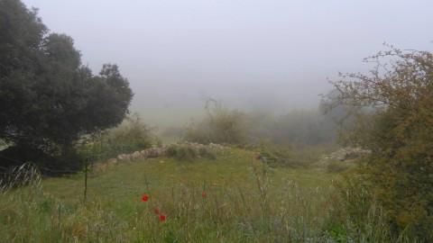 Ruta Jacobea 5ª etapa Vallivana-Morella 2016 029