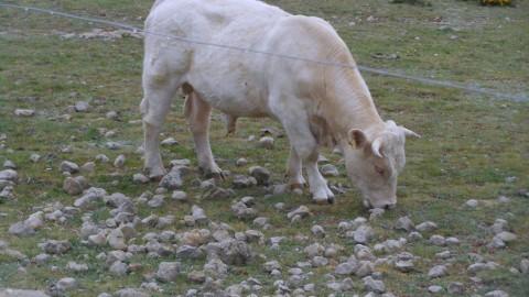 Ruta Jacobea 5ª etapa Vallivana-Morella 2016 050