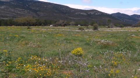 Ruta Jacobea 4ª etapa Segarrò-Vallivana 034