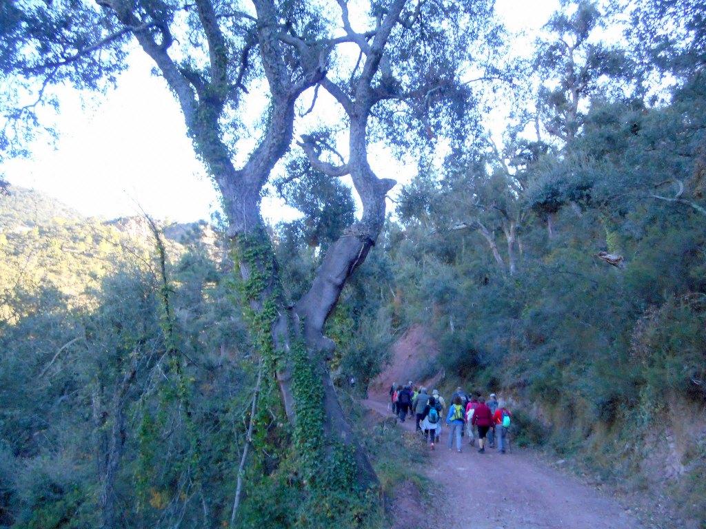 Algimia de Almonacid-Barranco de Aguas Negras-Cueva del Estuco 059