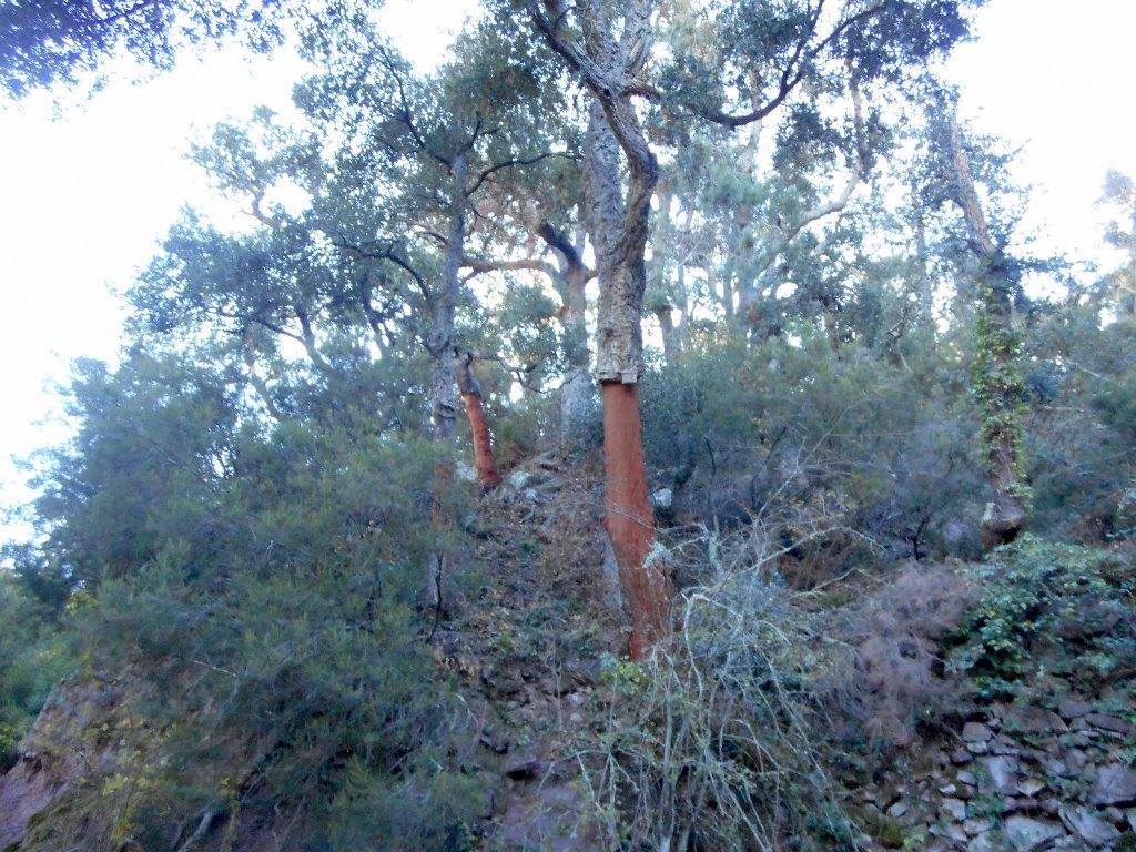 Algimia de Almonacid-Barranco de Aguas Negras-Cueva del Estuco 061