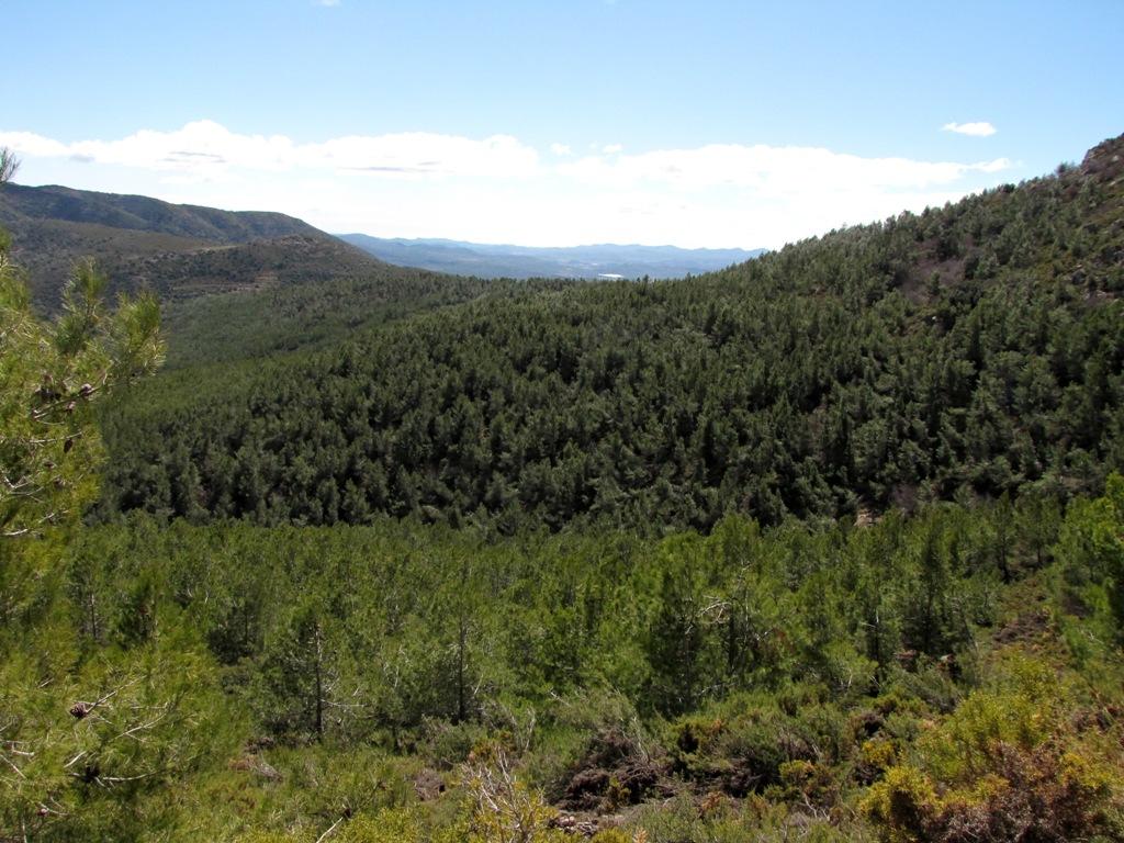 Pina de Montalgrao-Cueva Cerdaña 107