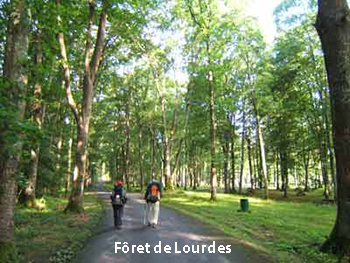 03foret-350
