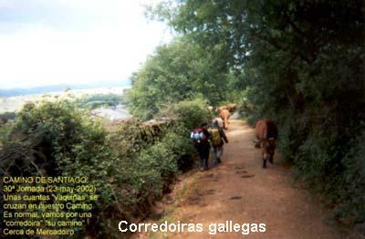 090corredoira-01