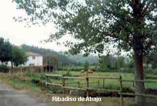 Ribadiso[1]-01