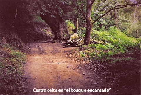 castro-bosque-500
