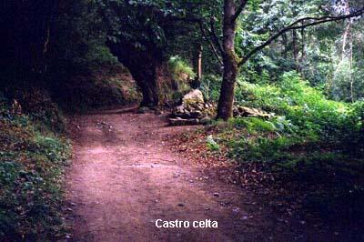 sarria-bosque0001-01